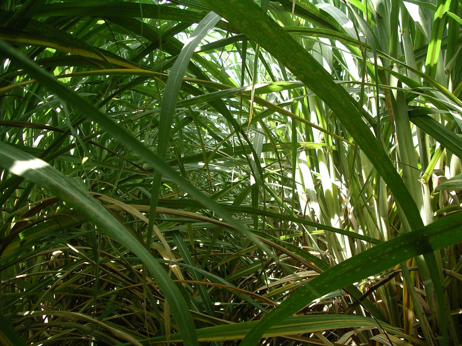 Ethanol fuel in Brazil  Wikipedia